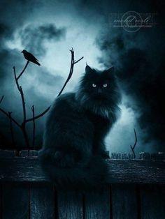 Mexická kočička černý péro