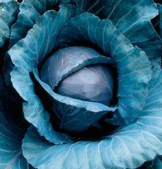 Organic Vegetable Seeds Online - Cabbage, Collards and Bok Choy Vegetable Seeds Online, Organic Vegetable Seeds, Organic Seeds, Grow Organic, Organic Vegetables, Vegetable Gardening, Organic Gardening, Gardening Tips, Cabbage Seeds
