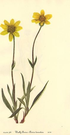 Botanical Prints ^-^