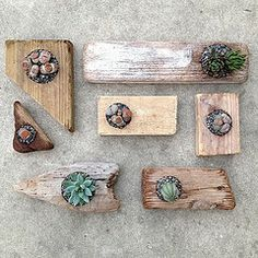 Wood planters with succulents and living rocks
