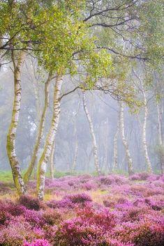 ***Heathland (England) by Verity Milligan on 500px