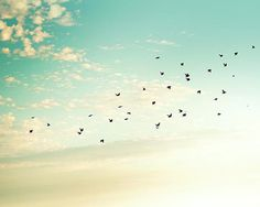 Hey, I found this really awesome Etsy listing at http://www.etsy.com/es/listing/158838876/fotografia-de-aves-aves-en-bandada-de