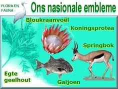 Ons nasionale boom, nasionale blom, nasionale vis, nasionale voël en nasionale dier - BelAfrique your personal travel planner - www.BelAfrique.com The Journey Book, Afrikaans Language, South African Flag, Senses Activities, Teaching Aids, My Land, African History, Kids Health, Out Of Africa