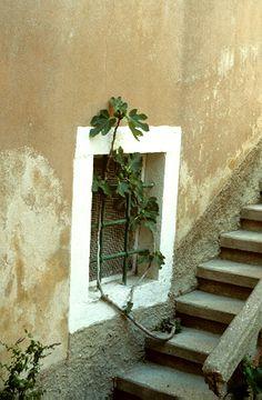 Közönséges füge (Ficus carica, Moraceae) (Turcsányi Gábor felvétele) Ficus, Plants, Painting, Art, Art Background, Painting Art, Kunst, Paintings, Fig