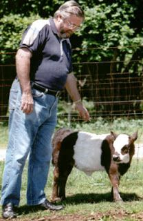 International Miniature Cattle Breeds Registry, INC. Miniature Cow Breeds, Miniature Cattle, Mini Cows, Mini Farm, Dwarf Cow, Farm Animals, Cute Animals, Unusual Animals, Horses