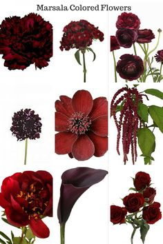 Top Picks for Marsala Colored Flowers - When Pantone announced their 2015 color of the year, it was no surprise, as this color had been on my top picks list