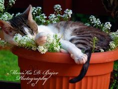 because cats grow in pots.. by Monika Bajor