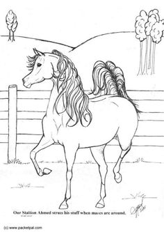 ausmalbilder pferde 11   ausmalbilder   ausmalbilder