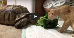 Le bonheur est dans les choses simples. Kevin la tortue et Nick le chat en sont la preuve : ils prennent beaucoup de plaisir à petit-déjeuner ensemble de bon matin dans leur petit refuges à perroquets du Kansas !