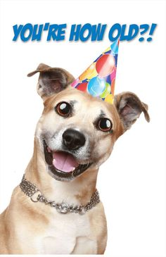 dogbirthday | Happy Birthday - Dog