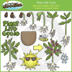 Plant Life Cycle Clip Art $