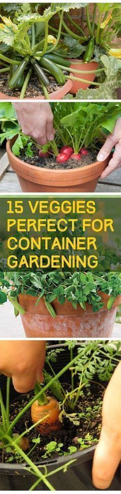 Veggies Perfect for Container Gardening - DIY Garden Indoor Vegetable Gardening, Veg Garden, Organic Gardening Tips, Edible Garden, Lawn And Garden, Gardening Hacks, Terrace Garden, Urban Gardening, Veggie Gardens