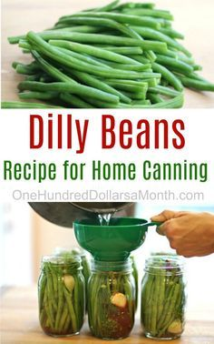 Dilly Beans, Dilly Bean Recipes, How to Can Dilly Beans, How to Can Green Beans, Canning Recipes Dilly Beans Canning Recipe, Canning Pickles, Canning Salsa, Pickles Recipe, Home Canning Recipes, Canning 101, Easy Canning, Jam Recipes, Dinner Recipes