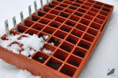 Hometalk :: Winter Sowing Seeds in the SNOW!