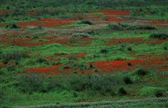 Israel in flower | ISRAEL21c