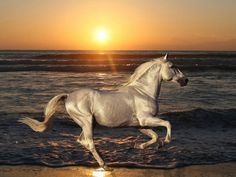 Image result for black and silver horse