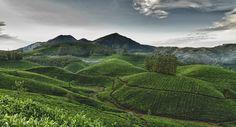 Munnar tea plantations by Matt Debouge on 500px