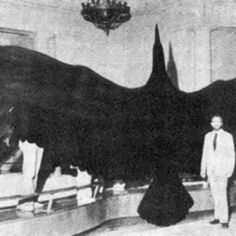 Teratorn - the biggest ever