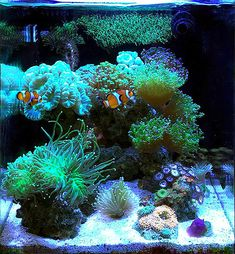 Saltwater Aquarium Setup, Coral Reef Aquarium, Saltwater Fish Tanks, Tropical Fish Aquarium, Nano Aquarium, Marine Aquarium, Aquarium Design, Marine Fish Tanks, Marine Tank
