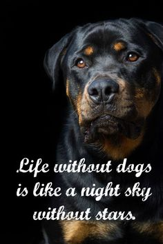 Fill your life with happiness - get a dog!