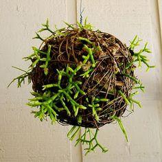 how-to-make-rainforest-ball