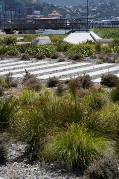 Waitangi-11-GravingDockGardens_Neil-Price « Landscape Architecture Works   Landezine