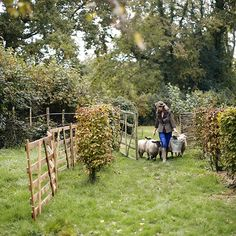 At Walnuts Farm most of the harvest from the kitchen garden has been gathered in but there's still lots to do. Find Walnuts Farm in Country Living magazine.