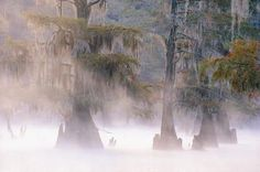 caddo lake - Sök på Google