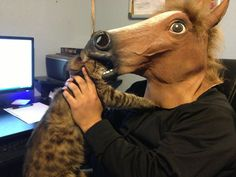 Things to do with a horse mask: Traumatize cat forever