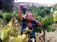 At the wine yards of Minos Wine Estate, Crete