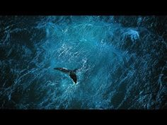 Planet Ocean-Exquisite Documentary on critical need to address environmental needs of ocean and planet as whole.