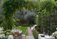 Back garden setting with pleached hedges in a narrow space, hedging and mixed boxwood balls