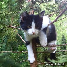 Meine Kumpeline #cat #katze #gourmetkater #gardening #pet #animal