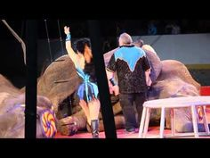 New Expert Report Details Animal Abuse, Neglect, and Coercion at Shrine Circuses | PETA