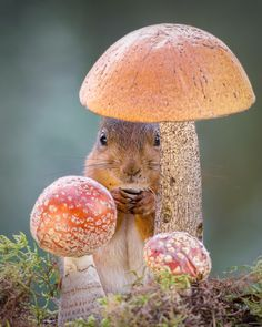"""Mushroom Wishes!""    <3"
