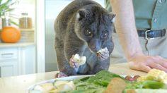 Animal Care Center Orlando, Busch Gardens Tampa Bay, Animal Care, Pet Care, Cats, Animals, Loom Animals, Gatos, Animales
