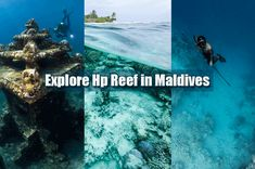 One of the most stunning snorkeling and scuba diving sites in the the HP Reef, situated at the Northern side of Male Atoll. The best you can do if you are a lover and want to explore marine life on your Maldives from Maldives Honeymoon Package, Honeymoon Packages, Travel Trip, Vacation Trips, Maldives Tour, Coral Blue, Yellow, Best Snorkeling, Corals
