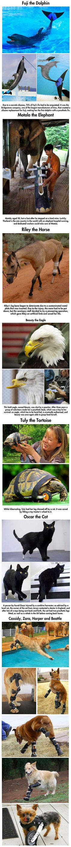 Amazin, yet real, stories of animals saved by prosthetics.