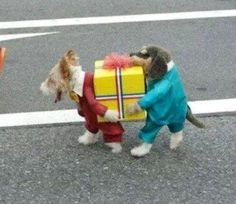 De Pakket Hondjes