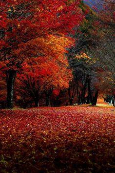 Beautiful Fall / Autumn leaves...