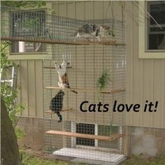 Cheap Enclosure Outdoor Cat Furniture Room With A View Petit Outdoor Cat Enclosure Cheap Cat Habitat, Cat Fence, Outdoor Cat Enclosure, Cat Cages, Cat Run, Cat Playground, Outdoor Playground, Kitten Care, Photo Chat