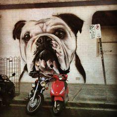 Bondi dog life