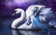 Swan Princess at home with the swans
