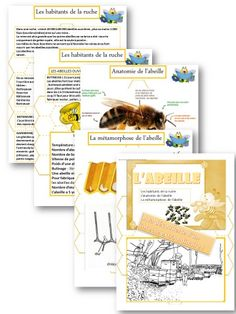 L'ABEILLE : FICHIER LECTURE / VOCABULAIRE et activités diverses CP /CE1 Sciences Cycle 3, French Classroom, Bee Friendly, Bee Theme, Nature Study, Babysitting, Bee Keeping, Montessori, Homeschool