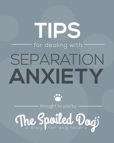 Tips for Dealing with Separation Anxiety in Dogs