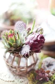 feathers and succulents