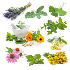 Herbář | PharmaPoint Lékárna