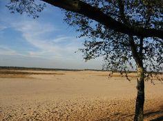 > de loonse en drunense duinen
