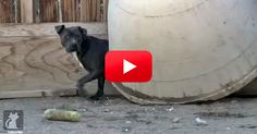 I'm So Happy There Are People Like This In The World! They Saved This Dog's Life! | The Animal Rescue Site Blog