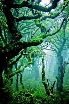 Amazing Snaps: Beautiful Nature | See more